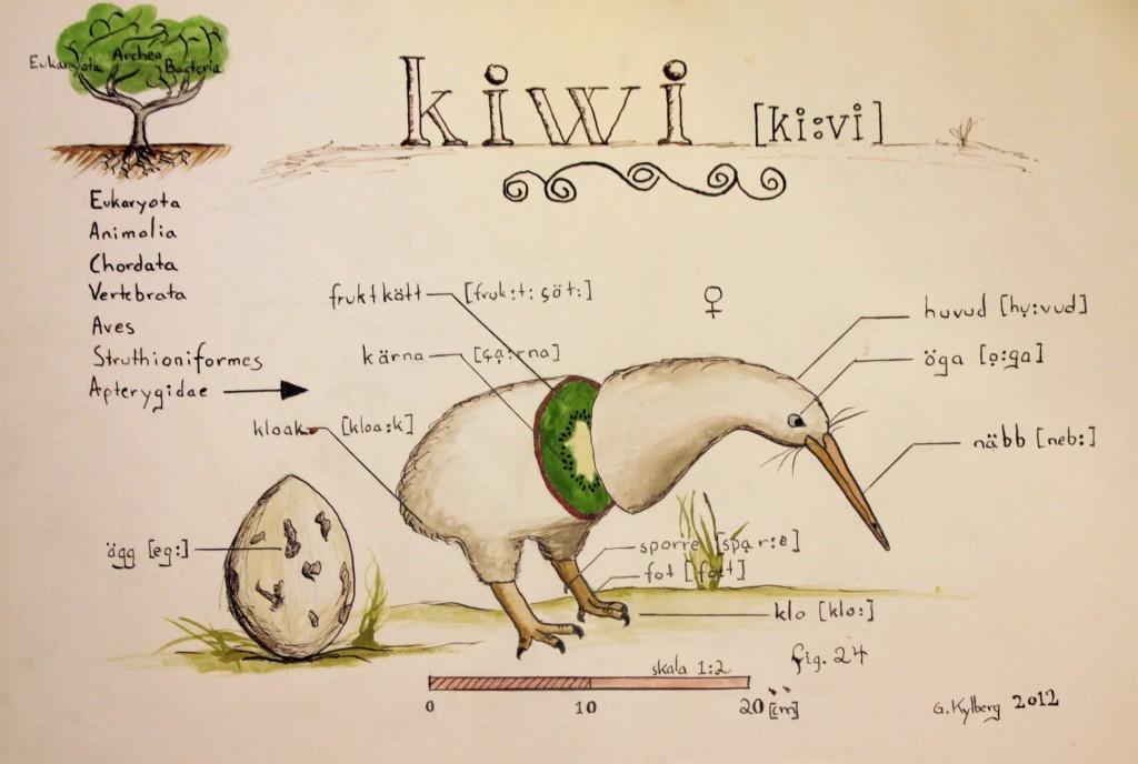Fig. 24 - Kiwi